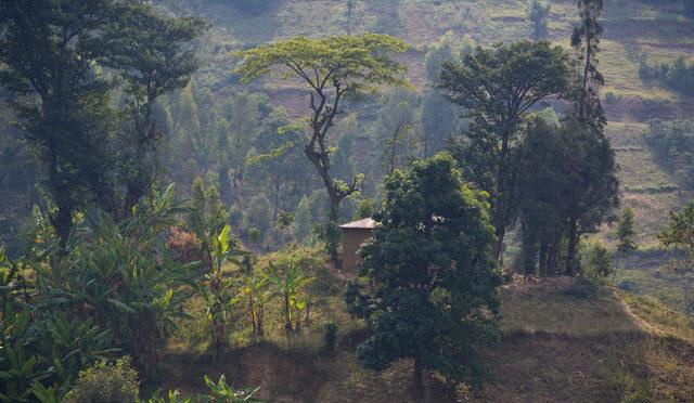 Kwihangana : Survivre, il y a vingt-six ans au Rwanda, dans un plafond.